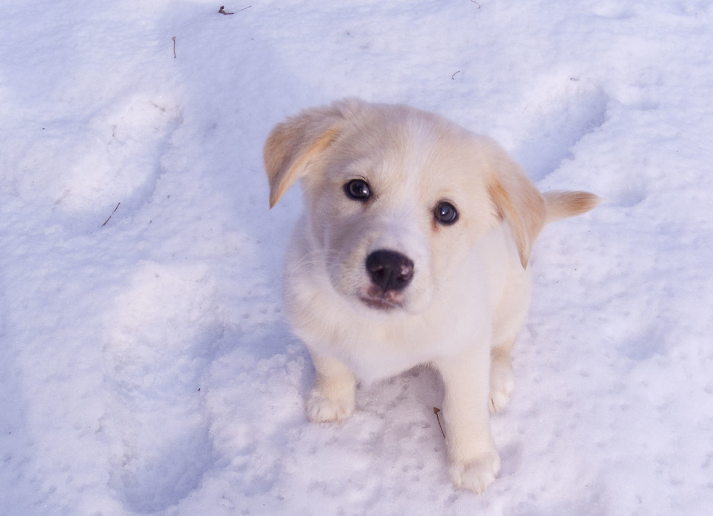 Ella the Snow Dog