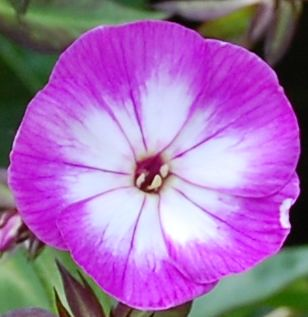 Purple And White Flower Michael Flickr