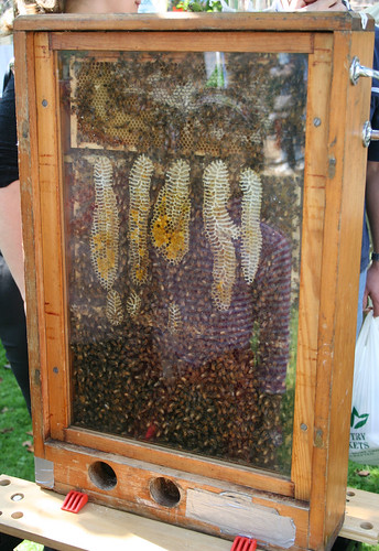 Bees in a case | by IanVisits