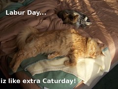 extra-caturday | by coneslayer