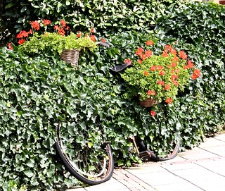 I didn't know we were growing bicycles dear | by Ben Licher