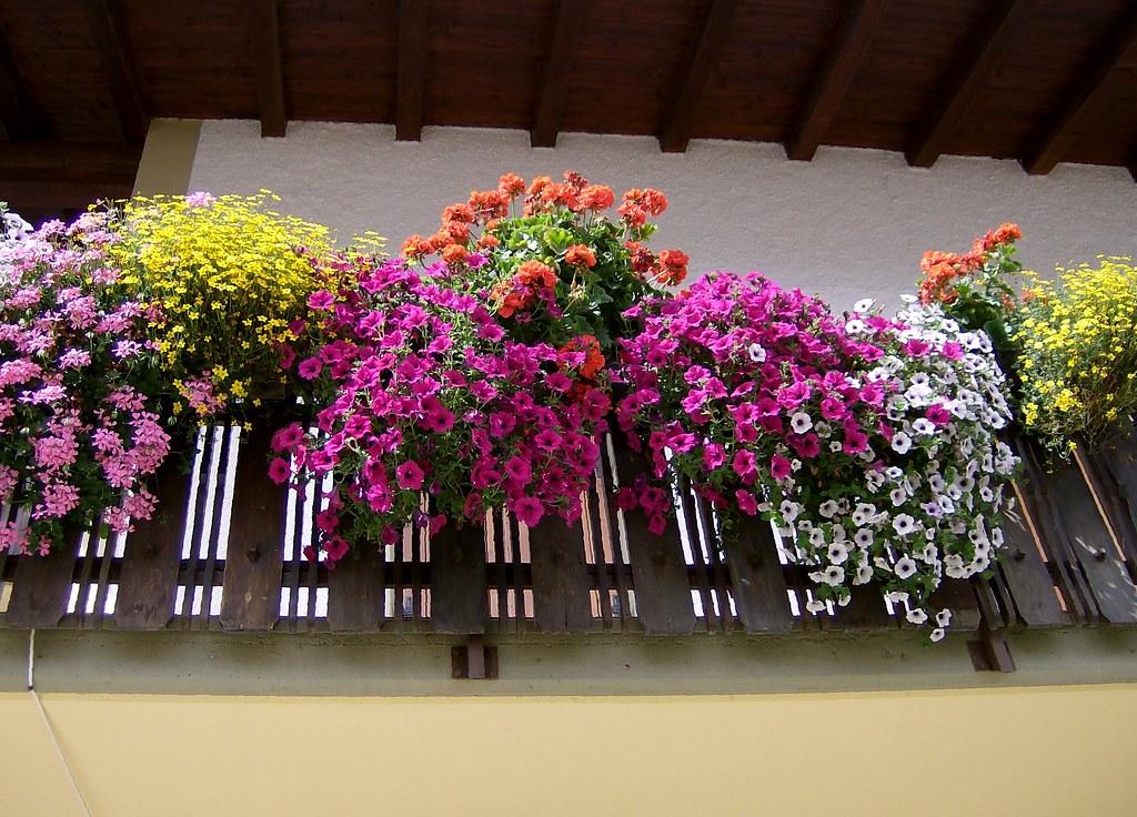 Fiori Balcone.Fiori Al Balcone Stefania Gualandi Flickr