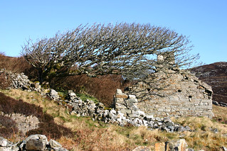 Abandoned Irish homestead and tree, Co. Donegal | by ronmcbride66