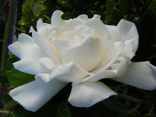 Gardenia Home Garden Decor Darlington Sa