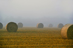 Misty Harvest | by algo