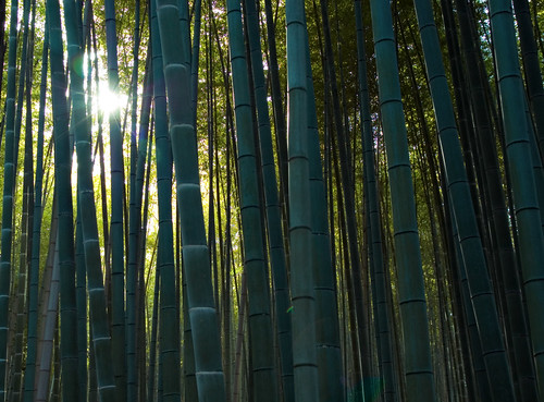 Bamboo Grove | by .Hessam