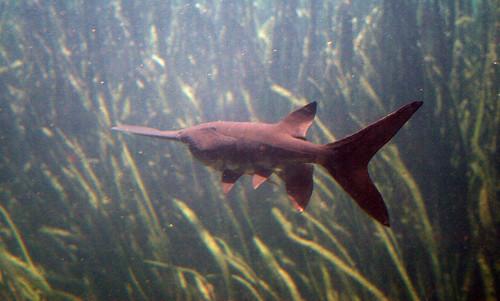 2008 07 25 athens tx freshwater fish hatchery 2947 for Fish hatchery texas