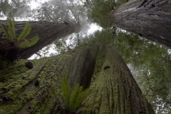 Redwoods Discussing | by The Hike Guy