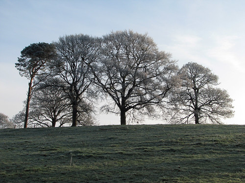Frosty Trees | by Nikki-ann