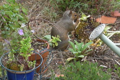Squirrel Things Sunflower Seeds Are Yummy | by greenwalksblog