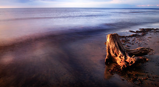 Lost stump | by gallow_chris