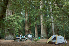 Jedediah Smith Campground | by laura gwinn