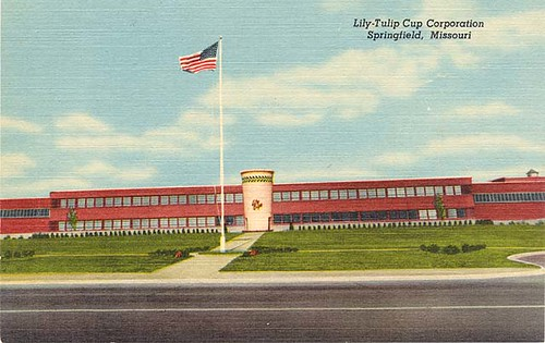 Lily Tulip Cup Springfield Missouri Old Postcard Just