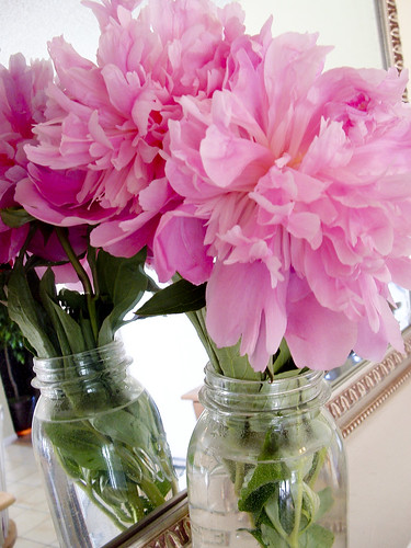 peonies1 | by heather hales DESIGNS