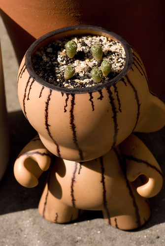 Mini Munny peyote special | by Mouldfish