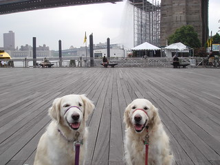 Frisket and Sailor at the NYC Waterfalls | by epc
