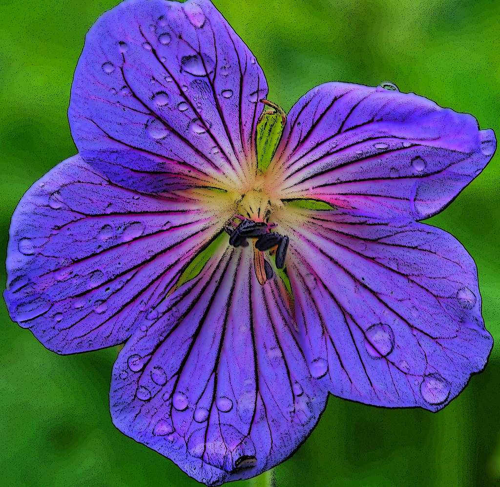 From valley of flowers this beauty is from valley of flo flickr by himalayan trails from valley of flowers by himalayan trails izmirmasajfo Image collections