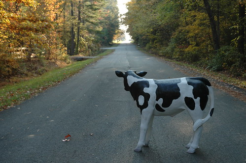Kain Road Cow 20081102 011 | by Kain Road Cul de Sac