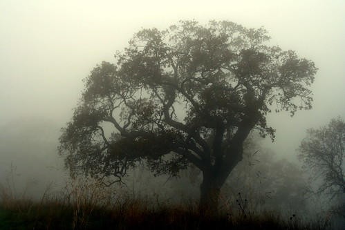 Ghost Trees | by John-Morgan