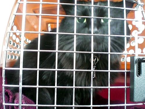 Free Cat Microchipping London