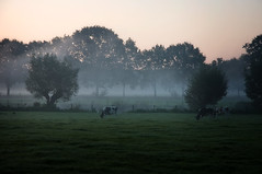 September Mornings II | by buteijn