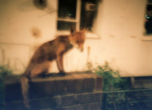 Islington Fox | by Alasdair