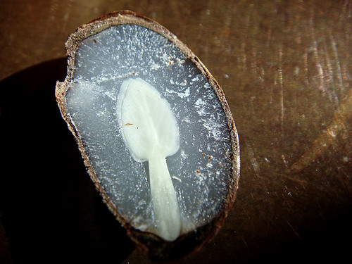 2009 - A Spoon In My Persimmon (seed). Very cool. | by road triper
