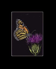 Butterfly print (matted) - by Eliza's Art | by WheresBeckybean