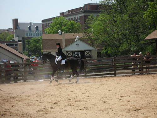 Dressage Musical Freestyle (Kur) | by mdequestrianclub