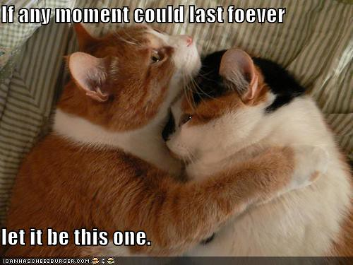 funny-pictures-cat-hug-moment-forever | by grooveybbb