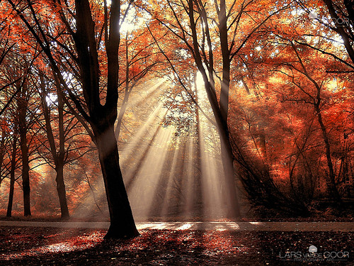 Dressed to Shine III | by larsvandegoor.com