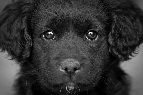 Through the eyes of a puppy | by macropoulos
