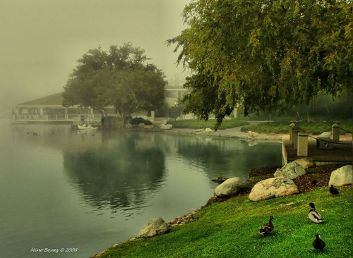 Misty Green | by Mine Beyaz