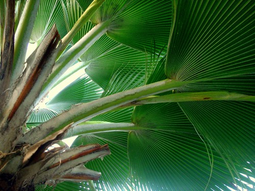 Hotel Bora Bora - Palm tree fixation 2 | by Super Starfish