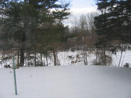 snow covered backyard and bayou shana mcdanold flickr