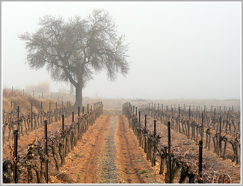 Amandier dans la brume | by Jolivillage