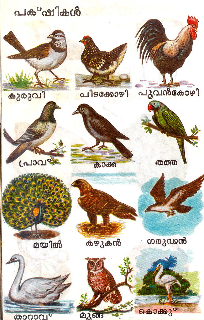 Bird names (Malayalam) | zawelski | Flickr