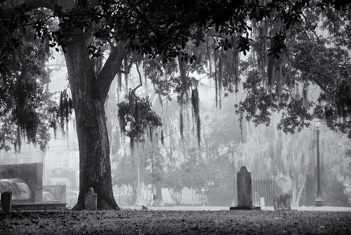 Fog over Colonial Park Cemetery | by Mark Coggins