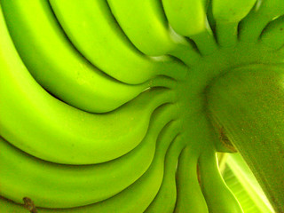 green banana | by mauren veras