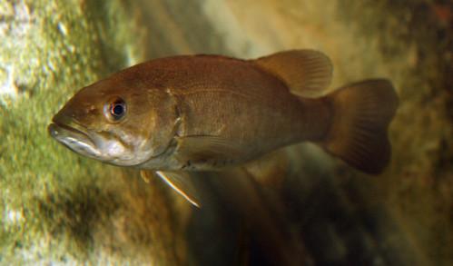 2008 07 25 athens tx freshwater fish hatchery 2991 for Fish hatchery texas