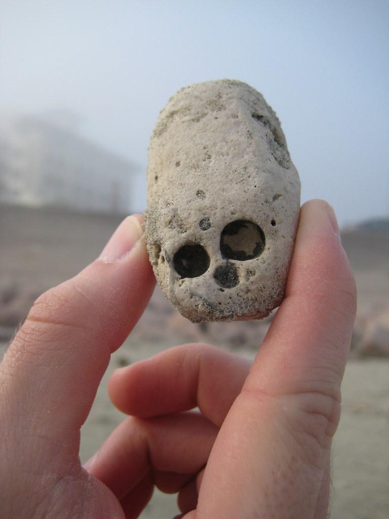 Baby Skull Head Found This Tiny Elongated Skull Rock Like Flickr
