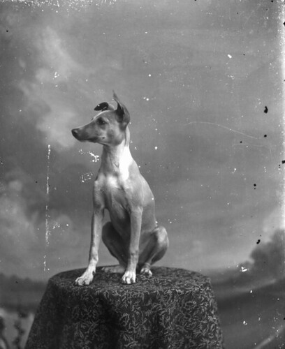 Dog posing on table | by State Library and Archives of Florida