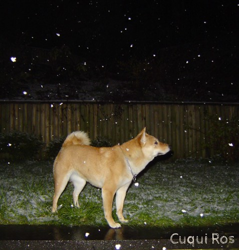 snow at midnight | by Cuqui Ros