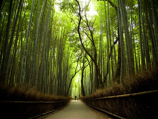 the path of bamboo, revisited #1 (near Nonomiya shrine, Kyoto) | by Marser