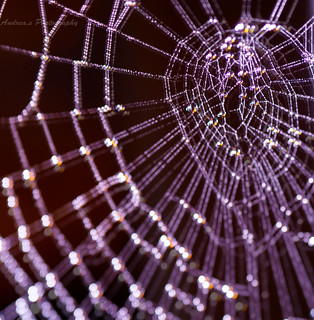 My Web Space | by Andreas-photography