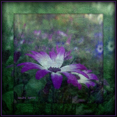 Green and purple | by sandra.harris10