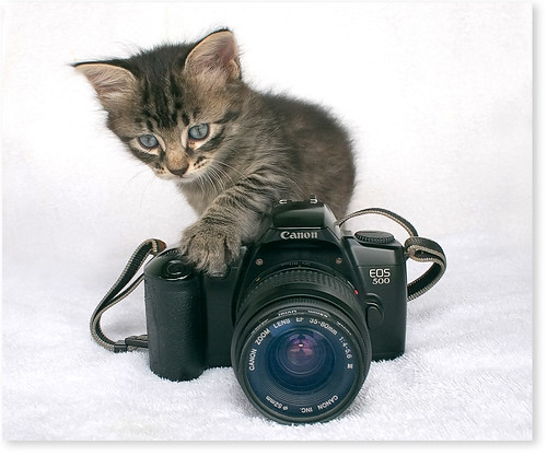 My little assistant...almost a photographer! | by Fernando Felix