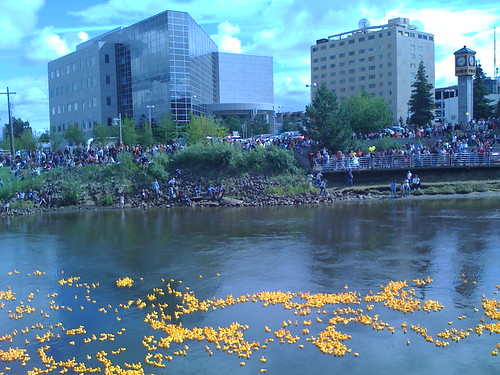 Fairbanks Rubber Duckie Race | by jkbrooks85