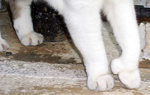 cat_toes | by claudinehellmuth