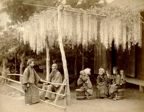 THE WISTERIA TRELLIS --- Passing the Day in Old Japan | by Okinawa Soba (Rob)